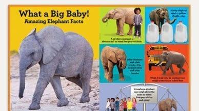 Big Trunks, Tiny Tales - Classroom Poster