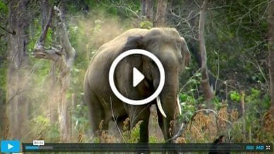 Elephants, Never Forget - Video