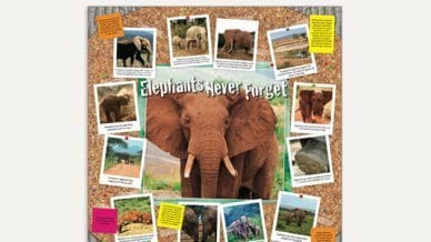 Elephants, Never Forget - Classroom Poster