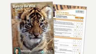 Grades 3-5: Born to Be Wild - Lesson Plan