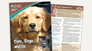 Grades 3-5: Cats, Dogs and Us - Lesson Plan