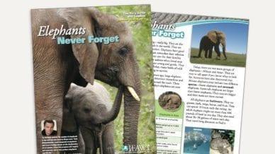 Grades 3-5: Elephants, Never Forget - Lesson Plan