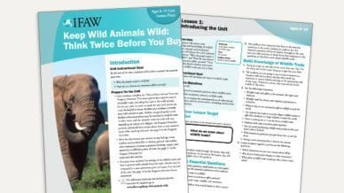 Grades 3-5: Keep Wild Animals Wild - Lesson Plan