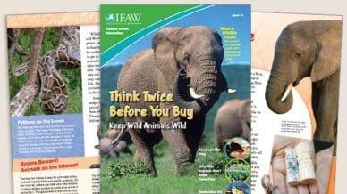 Grades 3-5: Keep Wild Animals Wild - Student Magazine