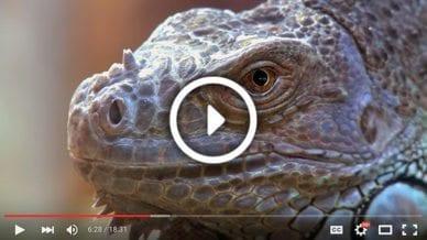 Grades 3-5: Keep Wild Animals Wild - Video