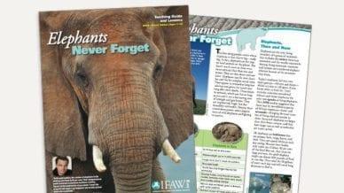 Grades 6-8: Elephants, Never Forget - Lesson Plan