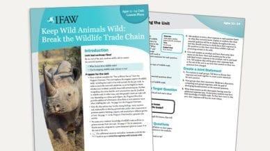 Grades 6-8: Keep Wild Animals Wild - Lesson Plan