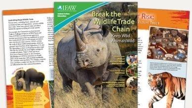 Grades 6-8: Keep Wild Animals Wild - Student Magazine