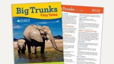 Grades K-2: Big Trunks, Tiny Tales - Lesson Plan