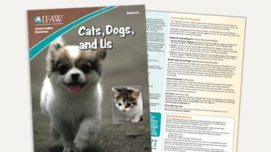 Grades K-2: Cats, Dogs and Us - Lesson Plan