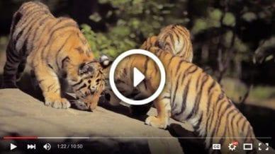 Grades K-2: Keep Wild Animals Wild - Video