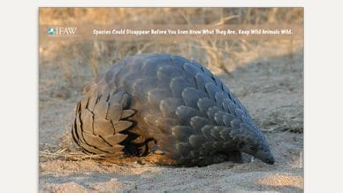 Grades 6-8: Keep Wild Animals Wild - Classroom Poster