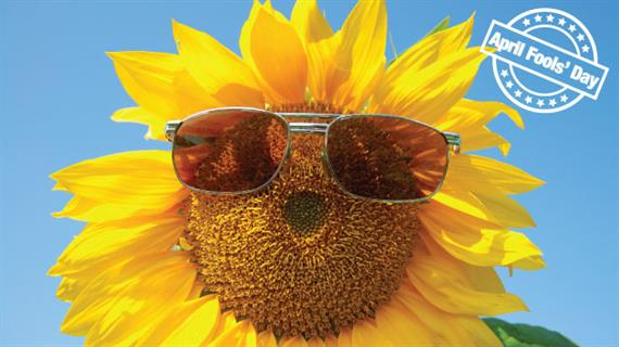 April Fools - Sun Flower