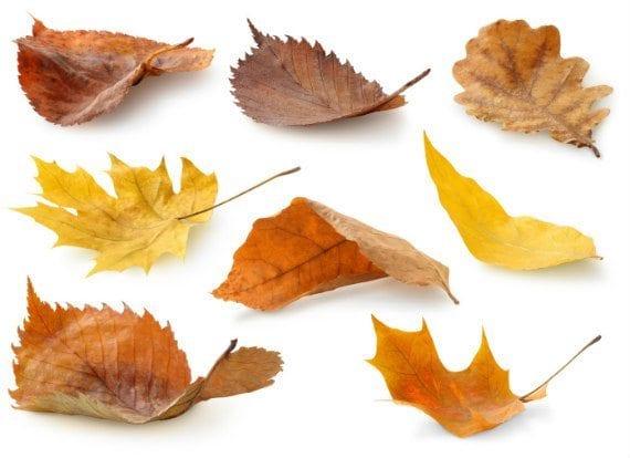 10-leaves