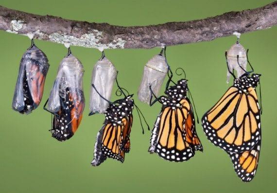 14-butterflies