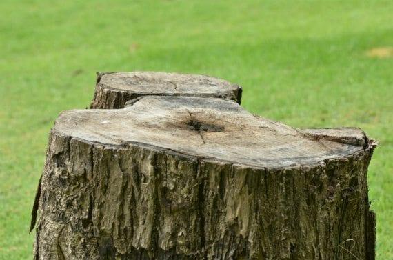 39-stumps