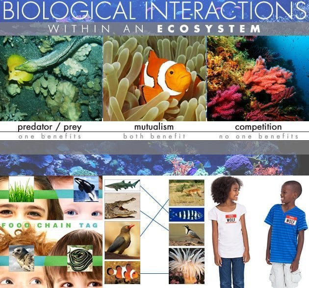 Biological-Interactions