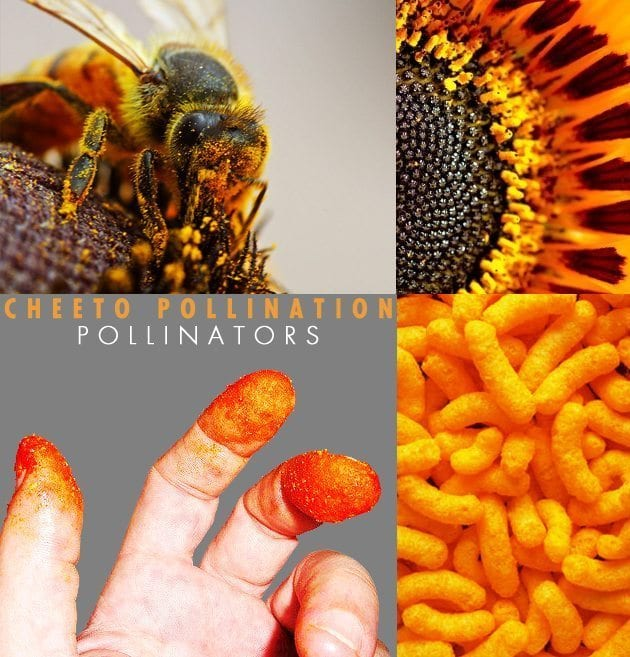 cheeto-pollination