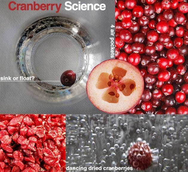 Cranberry-Science