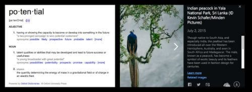 Fun Facts and Word of the Day from Bing Classroom Newsfeed