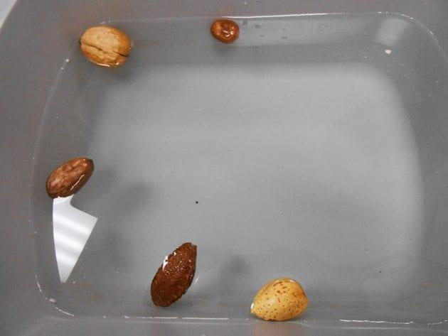 Sink-or-Float-Seeds