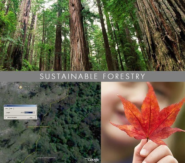 Sustainable-Forestry