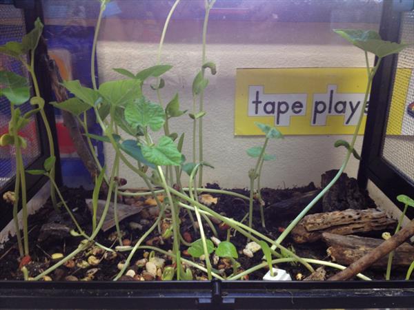 Picture one of our terrarium