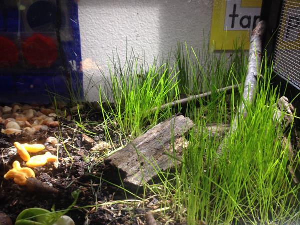 Picture four of our terrarium