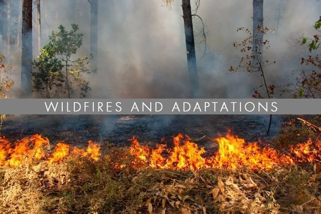 wildfires-and-adaptaions
