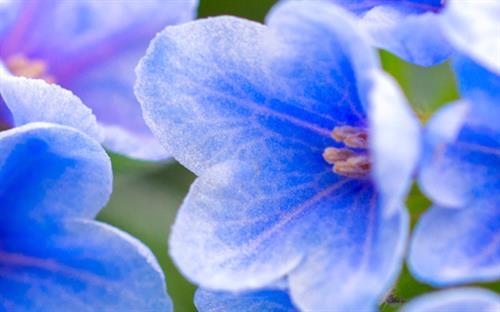 Epson Blog FLOWER