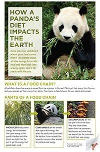 How a panda's diet impacts the earth classroom poster