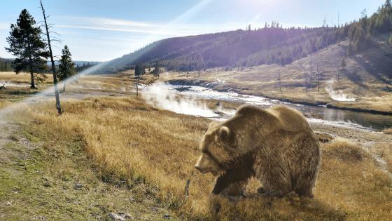 WETA Yellowstone
