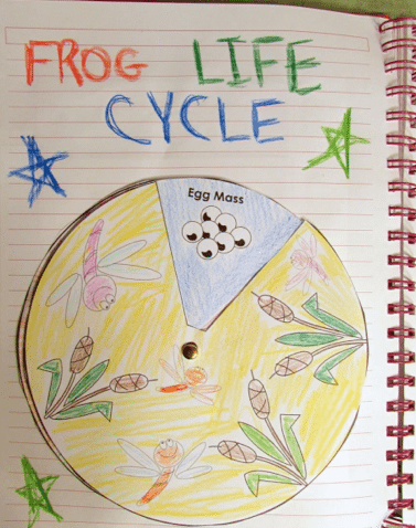 frog-life-cycle-19-freebies-hmh