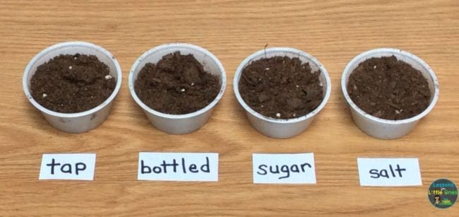 Small cups of soil labeled tap, bottled, sugar, and salt (2nd Grade Science)