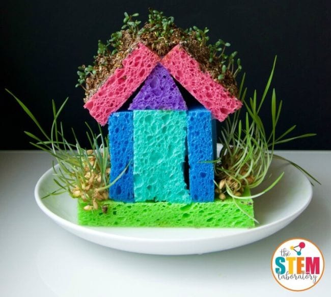 Model house made of colorful sponges with bean sprouts growing from it (2nd Grade Science)