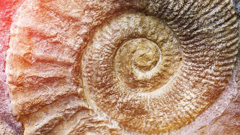 Use fossils to show your students what ancient environments were like.