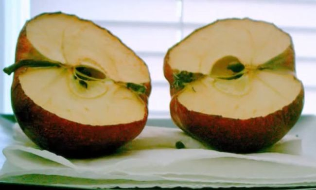 Apple cut in half, beginning to turn brown and dry out (Fifth Grade Science)