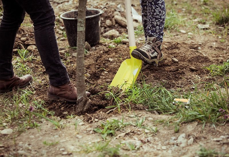Digging in ground with shovels