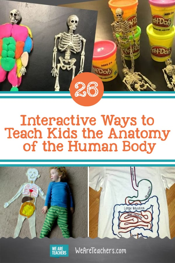 26 Interactive Ways to Teach Kids the Anatomy of the Human Body
