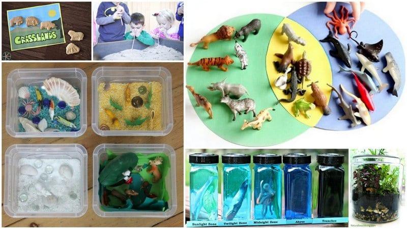 Animal Habitat activities