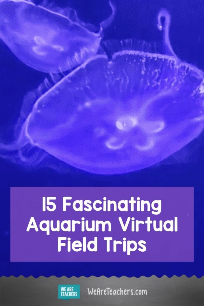 15 Fascinating Aquarium Virtual Field Trips