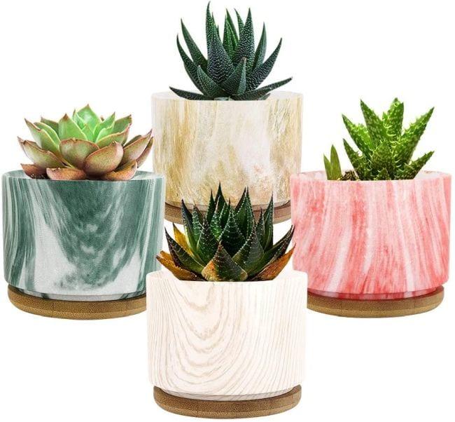 Easy care succulent plants