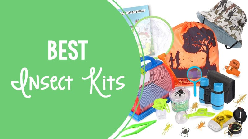 Best Insect Kits