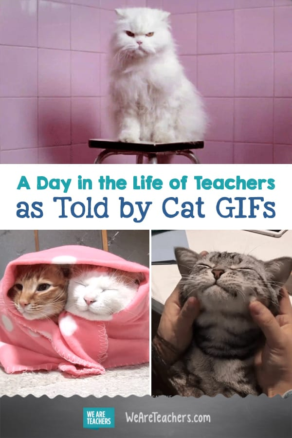 A Day in the Life of Teachers as Told by Cat GIFs