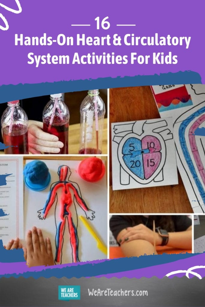 16 Hands-On Heart and Circulatory System Activities For Kids