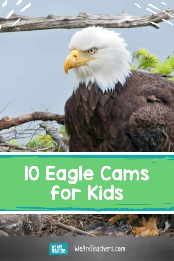 Check Out These Awesome Eagle Cams for Kids