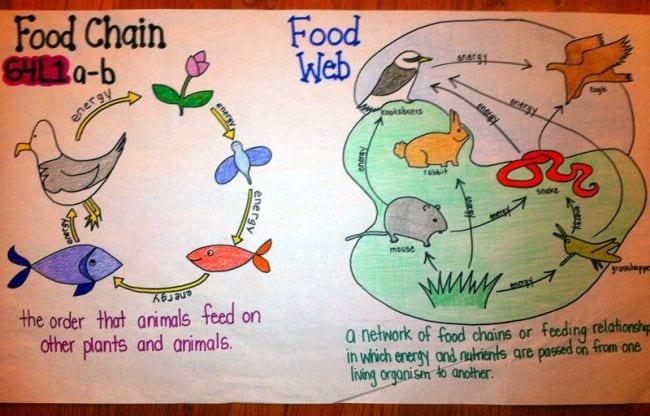 Food Webs Pinterest