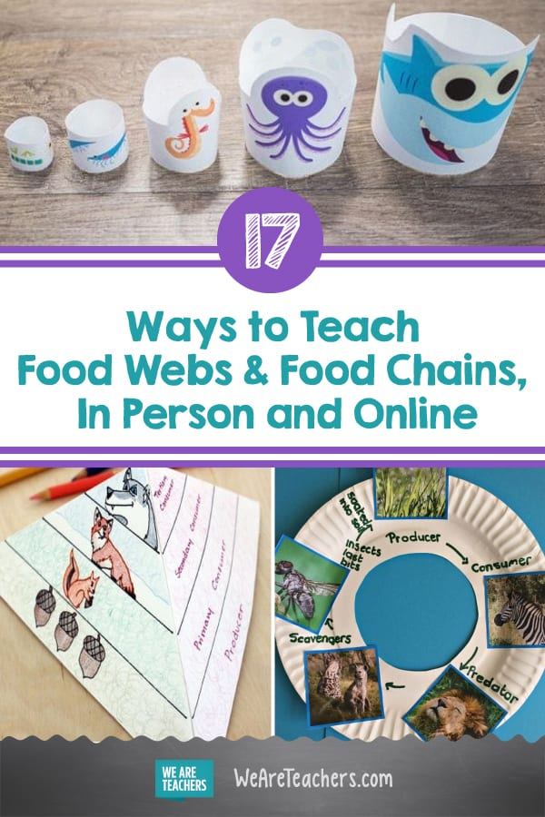 17 Cool Ways to Teach Food Webs and Food Chains, In Person and Online