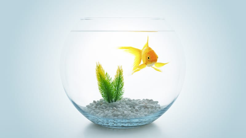 How I Use FishBowl Discussions to Engage Every Student