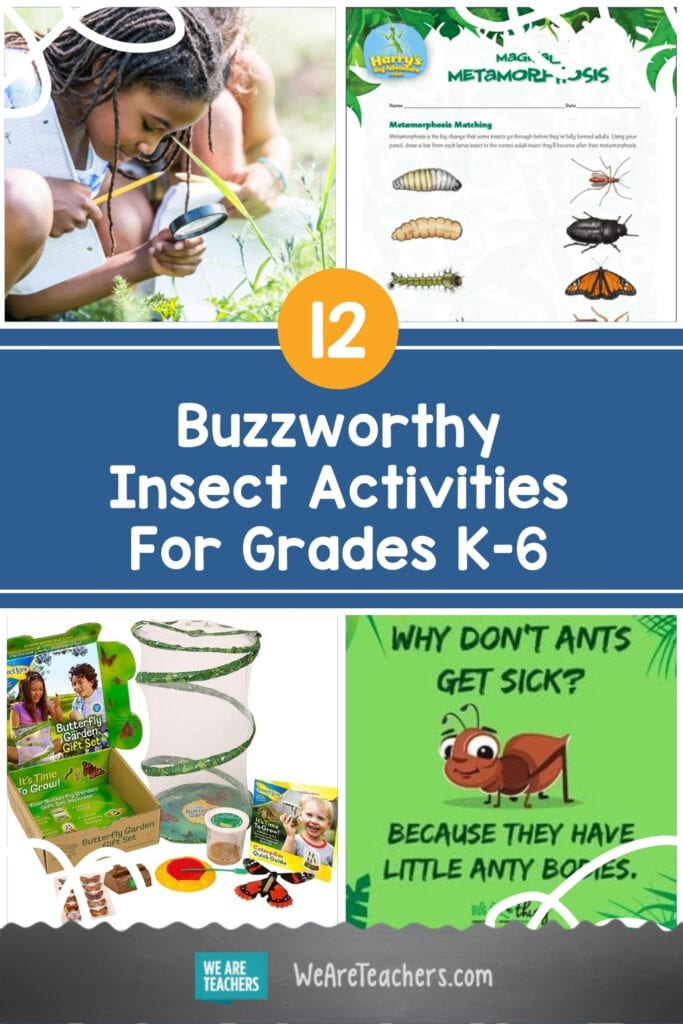 12 Buzzworthy Insect Activities For Grades K-6